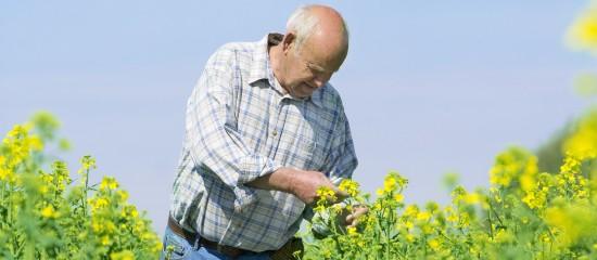 Salariés agricoles: des cotisations de retraite complémentaire plus élevées en2019