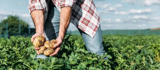 Exonération de cotisations pour les travailleurs occasionnels agricoles