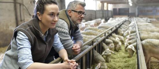 Conjoint travaillant sur l'exploitation agricole: déclaration obligatoire!